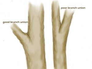 branchunion