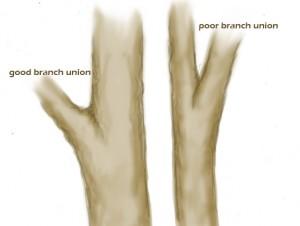 branchunion