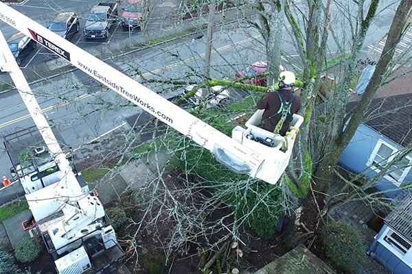 Heavy snowfall can cause Seattle tree branches to break but preventative pruning can minimize risk of breakage.